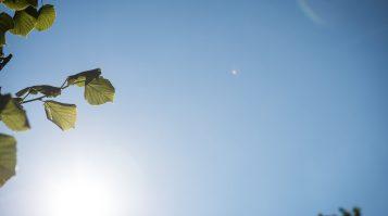 V Žiline si uctili pamiatku obetí pandémie,  v mestskom parku vysadili výnimočnú lipu