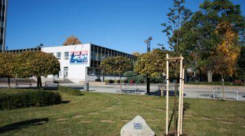 Nádherná lipa pripomína tragédiu pandémie už aj v Michalovciach